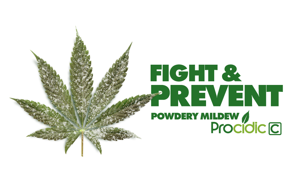 Fight and prevent powdery mildew