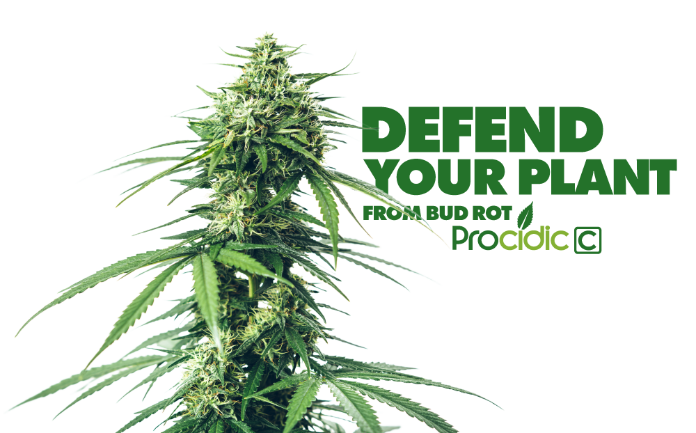Defend your plant from bud rot